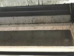 エアコンクリーニング 完全分解の効果 洗浄前